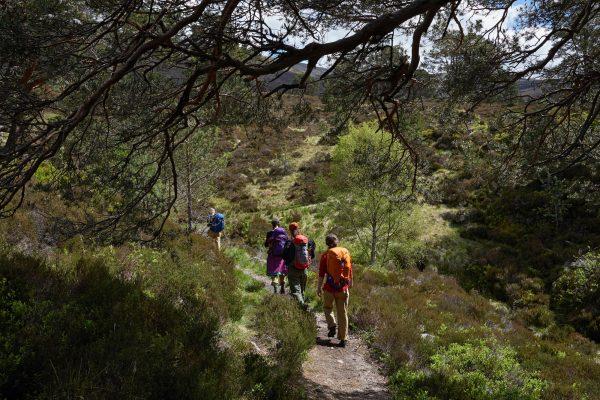 Into The Mountain traineeships